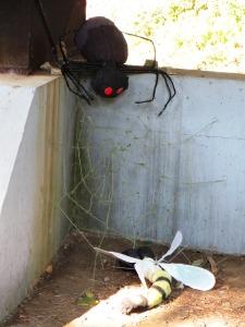 photo of Arachnophobia